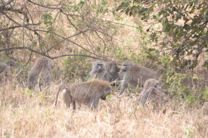 Tanzania 2 069