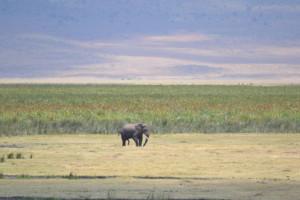 Tanzania 2 115